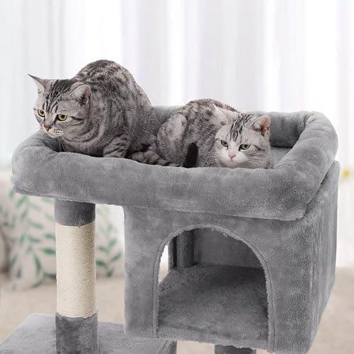 Cat setting in cat ACat Furniture