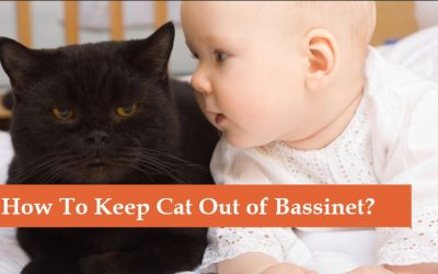 How to Keep Cat out of Bassinet? [Tricks that I'm Using]